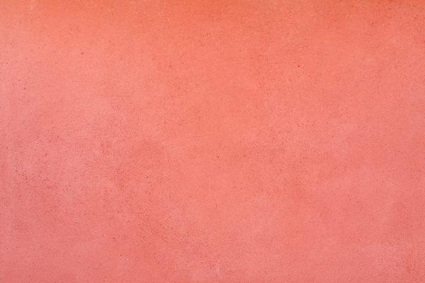 8. Rosa palo